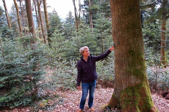 Wo man sich den Baum für die letzte Ruhe im Internet aussuchen kann