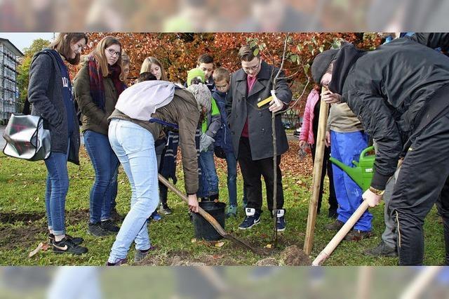 Klimabotschafter pflanzen Bäume