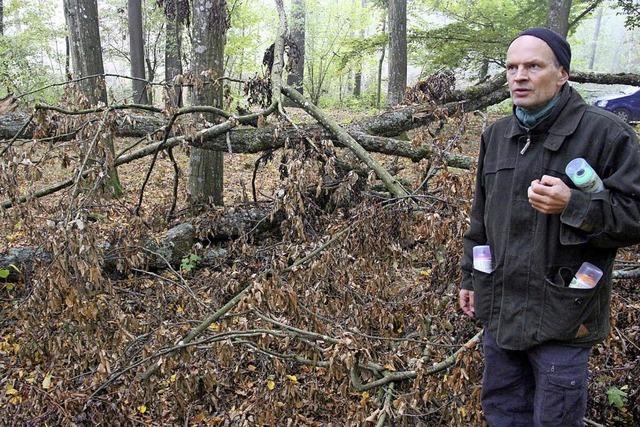 Finanziell erfolgreiches Jahr für Forstbetrieb