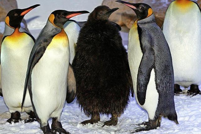 Keine Ruhezone für Pinguin und Co.
