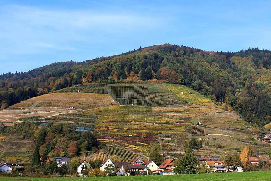 Glottertals sonnige Spitzenweinlage au...oße Fläche heißt seit 1959: roter Bur.  | Foto: Joshua Kocher