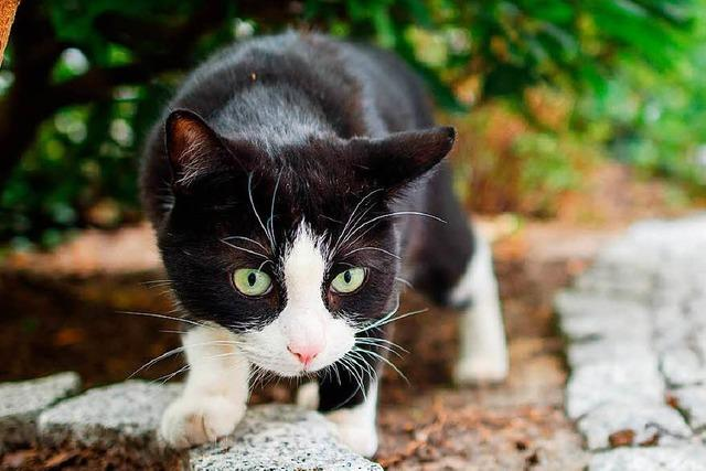 Polizei findet in der Isteiner Straße eine verletzte Katze und bringt sie zum Tierarzt