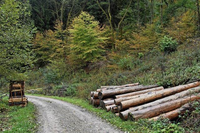Dickes Minus für den Forst