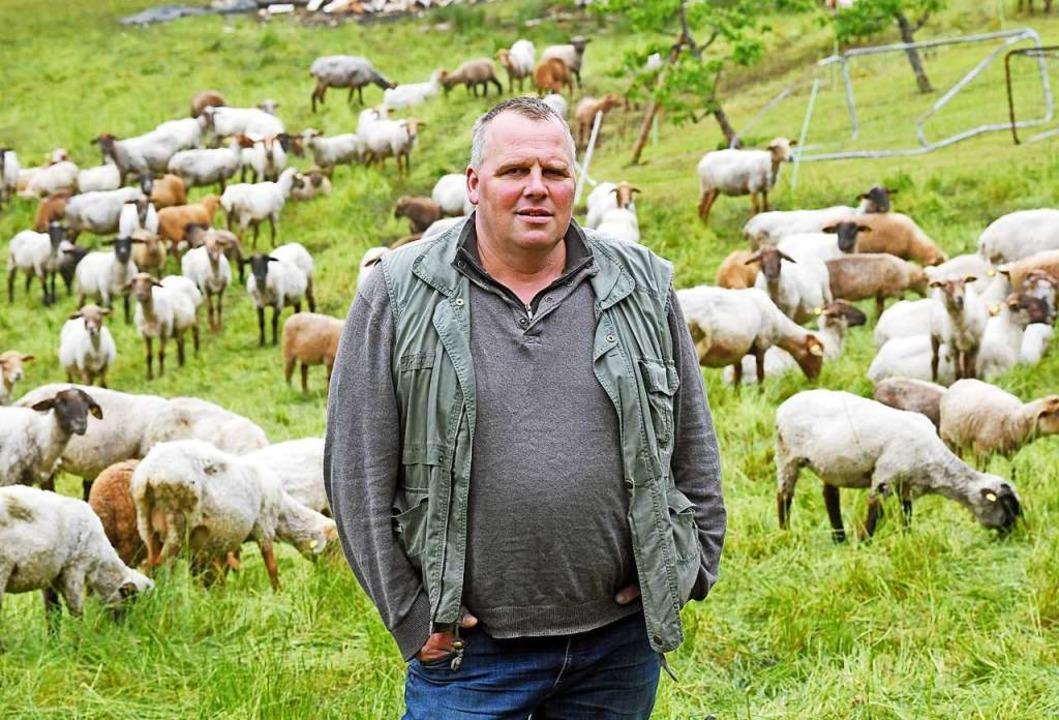 40 Schafe von  Gernot Fröschle aus  Ba...l 2018 bei einer Wolfsattacke getötet.  | Foto: dpa