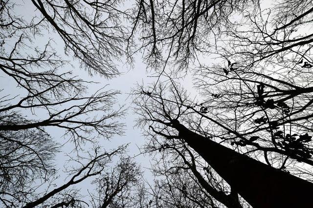 Der Wald steckt in Schwierigkeiten