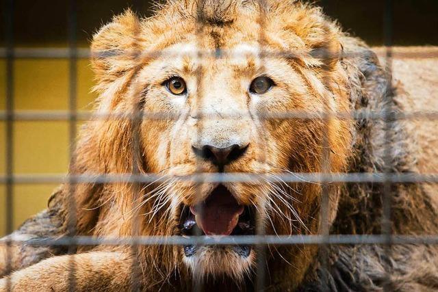 Zoos drehen an der Preisschraube - Wilhelma legt bis 25 Prozent zu