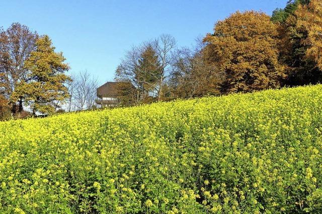 Herbst am Sauberg