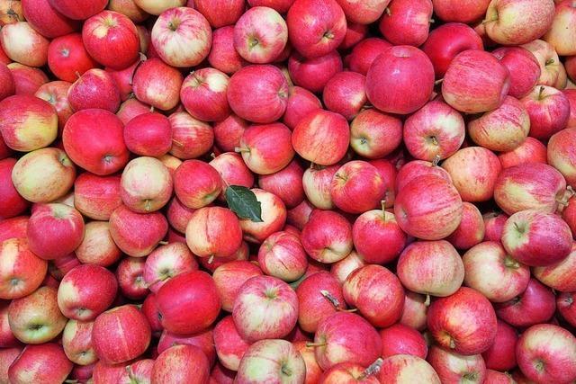 Warum alte Sorten Apfelallergikern helfen, neuere Sorten zu essen