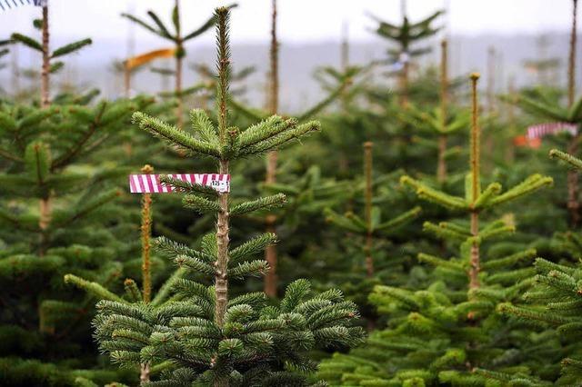 80-jähriger Tannenbaumdieb in Bonndorf erwischt