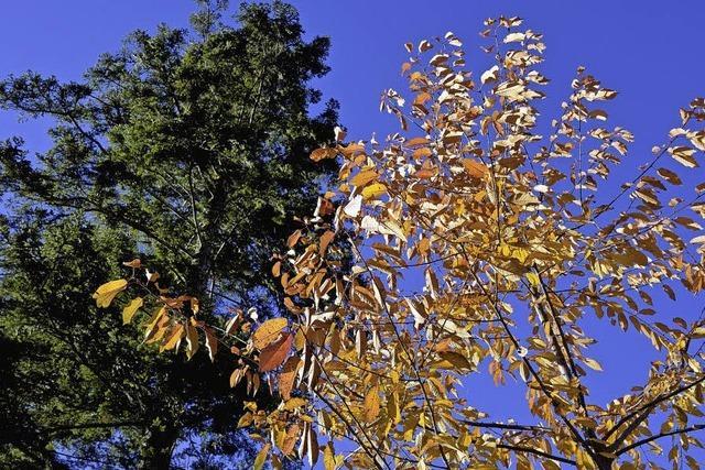 Waldgemeinschaft als Vorzeigemodell