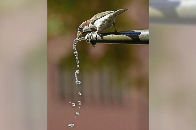 Kostenlos Wasser zapfen
