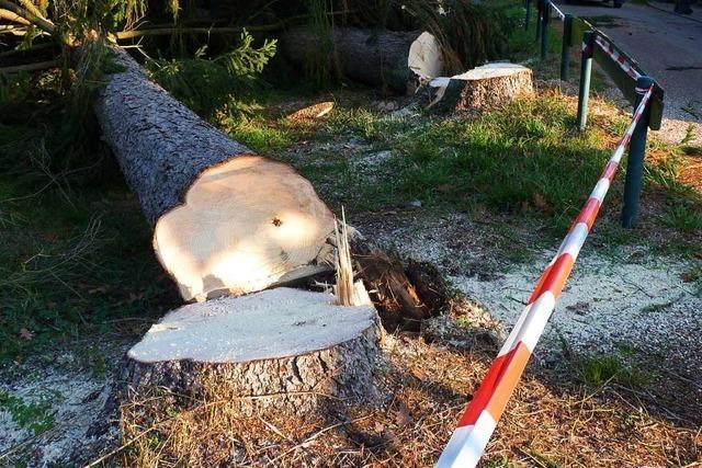 Im Brennet-Park in Hausen wurden rund 50 Bäume gefällt