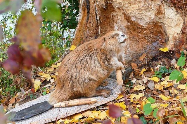 Erster Landkreis im Südwesten mit Handlungsleitfaden zu Wildtieren