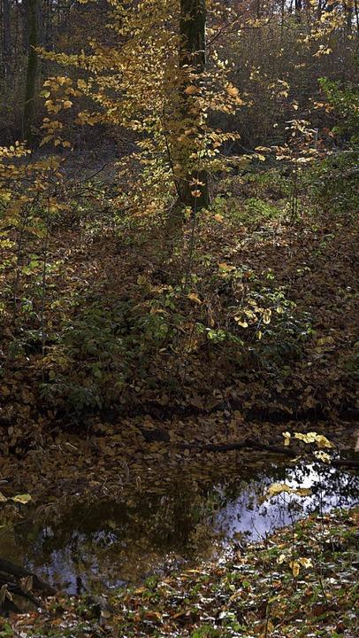 Auch wenn die Bäche im Reuter Wald jet...atur müsste es noch wochenlang regnen.  | Foto: Benedikt Sommer