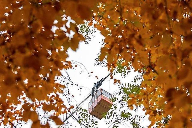 Landratsamt kontert Kritik von Verbänden an Seilbahn-Idee des Europa-Parks