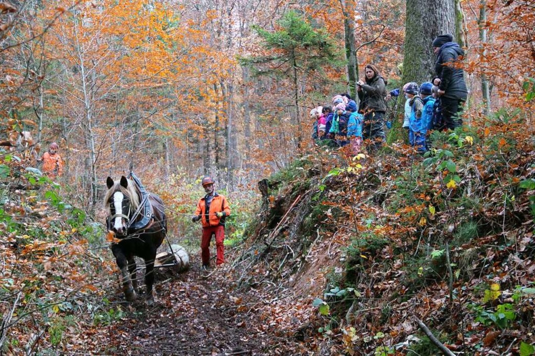 Waldarbeiter mit Pferd: Um Bodendenkmä...er Förster in Fahrnau Rückepferde ein.  | Foto: Monika Weber