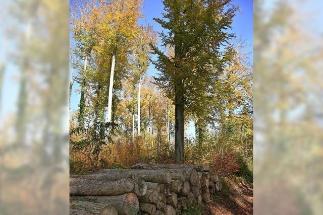 Stadtwald leistet Beitrag zur Umwelt