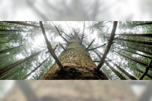 Bleibt der Forstbezirk erhalten?