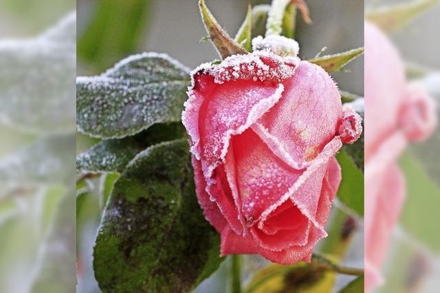 Kühle Schönheit