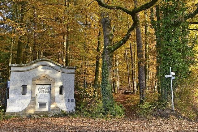 Jugend plant Singletrail im Rümminger Wald
