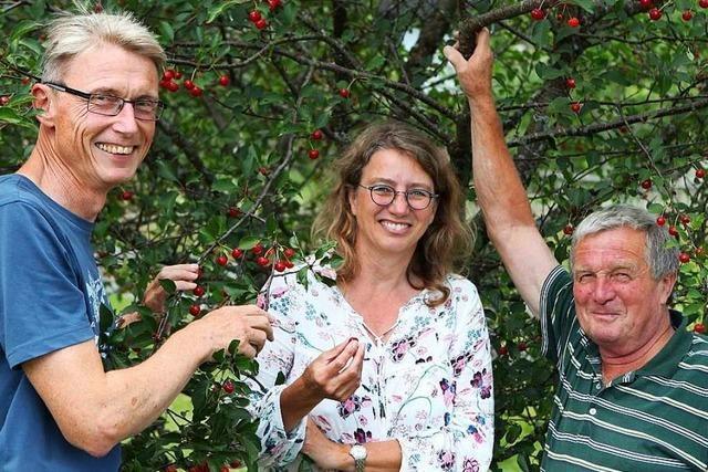 Eine Baumschule rettet die alte Sauerkirschsorte Gresger Ammele