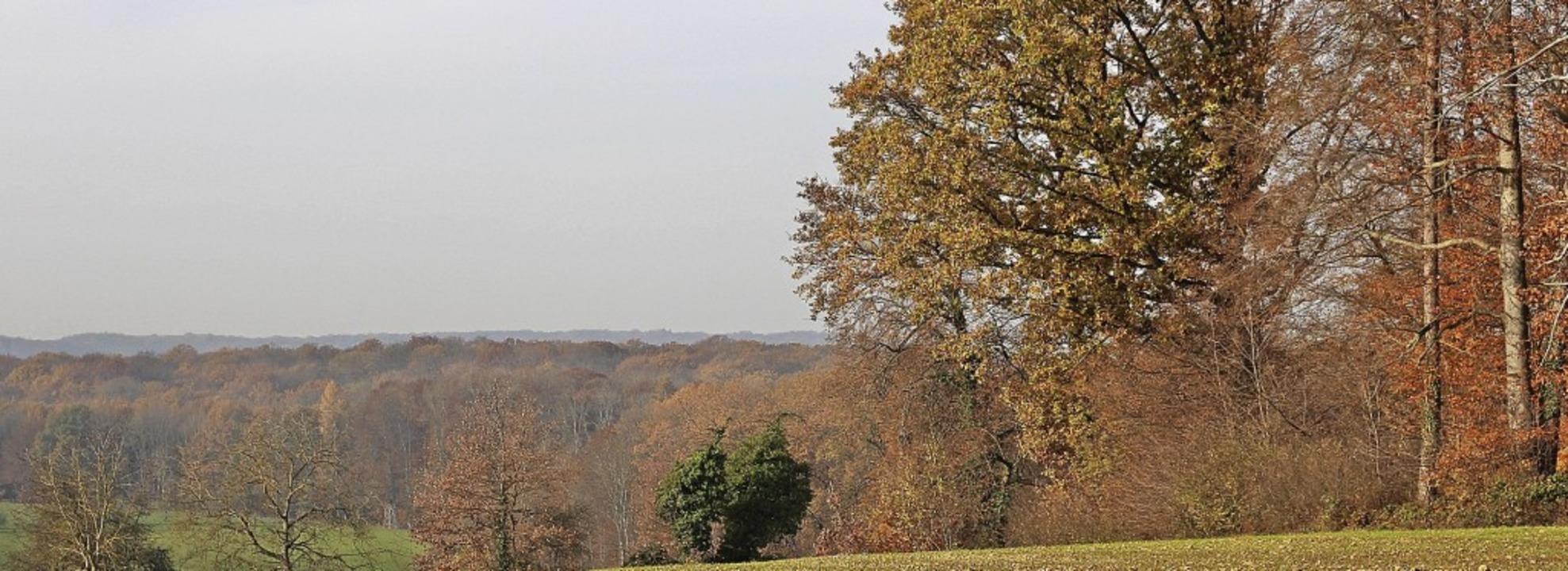 Herbststimmung über dem Schallbacher Gemeindewald   | Foto: Rolf Rhein