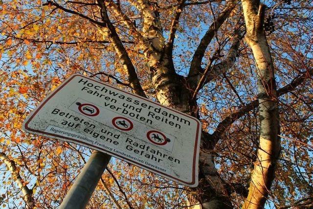Es gibt nun wohl doch keine Initiative zur Rettung der Elzdamm-Bäume