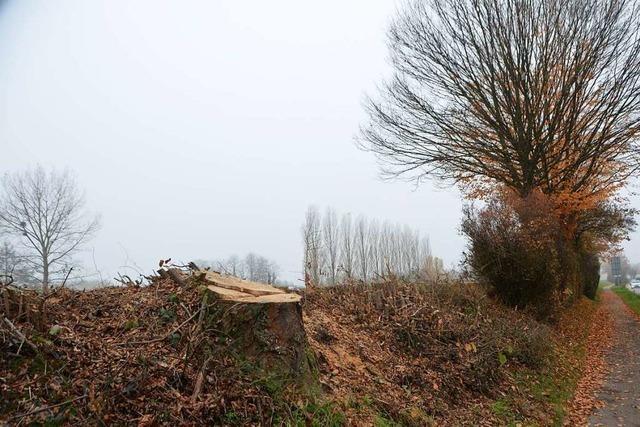 Bürgerinitiative will möglichst viele der vom Fällen bedrohten Bäume am Elzdamm retten