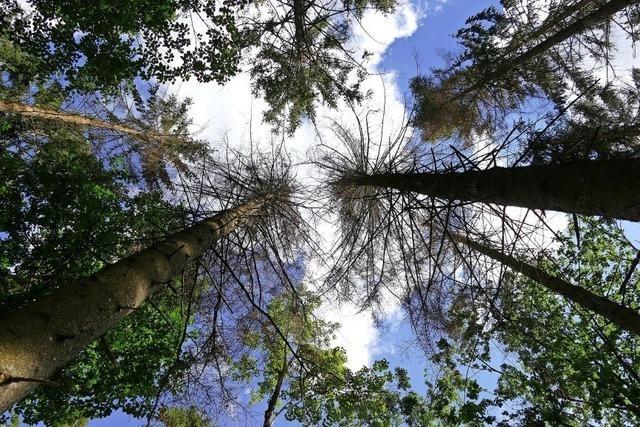 Der Stadtwald im Bann des Borkenkäfers