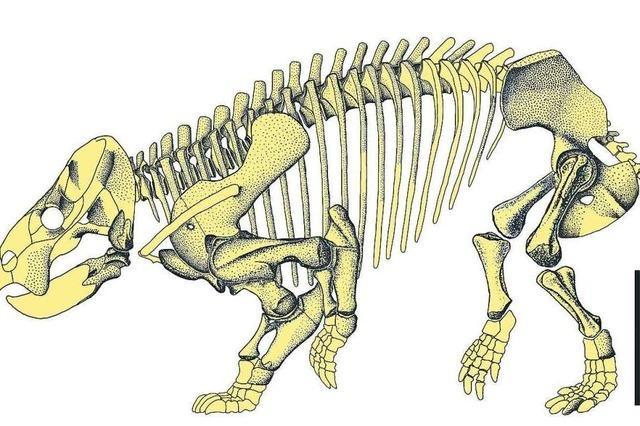 Urahn der Säugetiere hatte die Größe eines Elefants und die Statur eines Nashorns