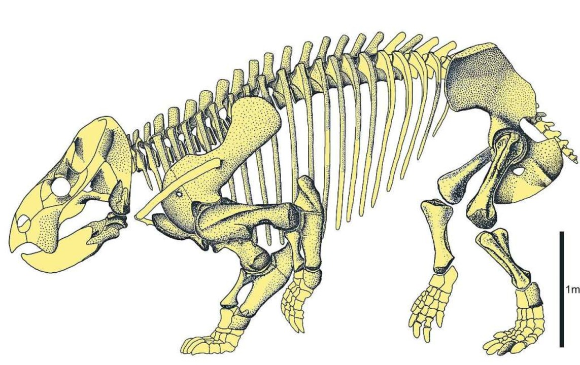 Das  Skelett des Urahns  | Foto: -ia