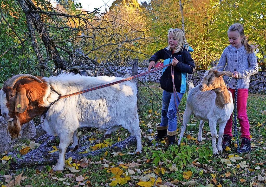 Isabell (links) und Sophie haben gut z..., die beiden Ziegen im Zaum zu halten.  | Foto: Fotos: Sarah Trinler