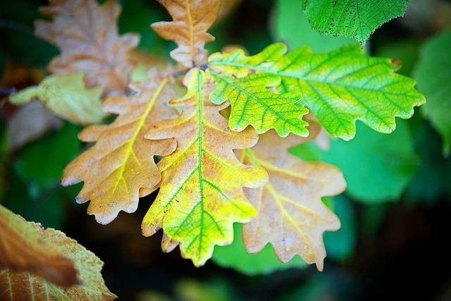 Schädlinge, Sturm und Trockenheit setzten dem Wald 2018 besonders zu