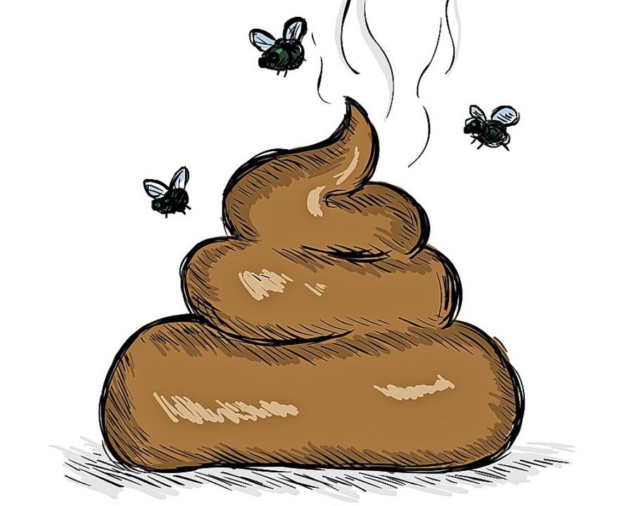 In Hundekot verbergen sich Parasiten wie Hundespulwürmer.      Foto: nikiteev (stock.adobe.com)