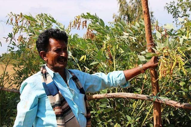 In Indien gibt es immer mehr Klimaschutzprojekte