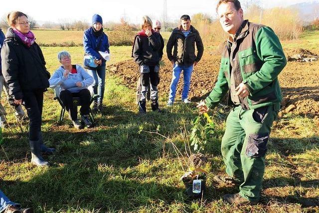 Das Stadtgärtle in Rheinfelden bekommt neue Pflanzen