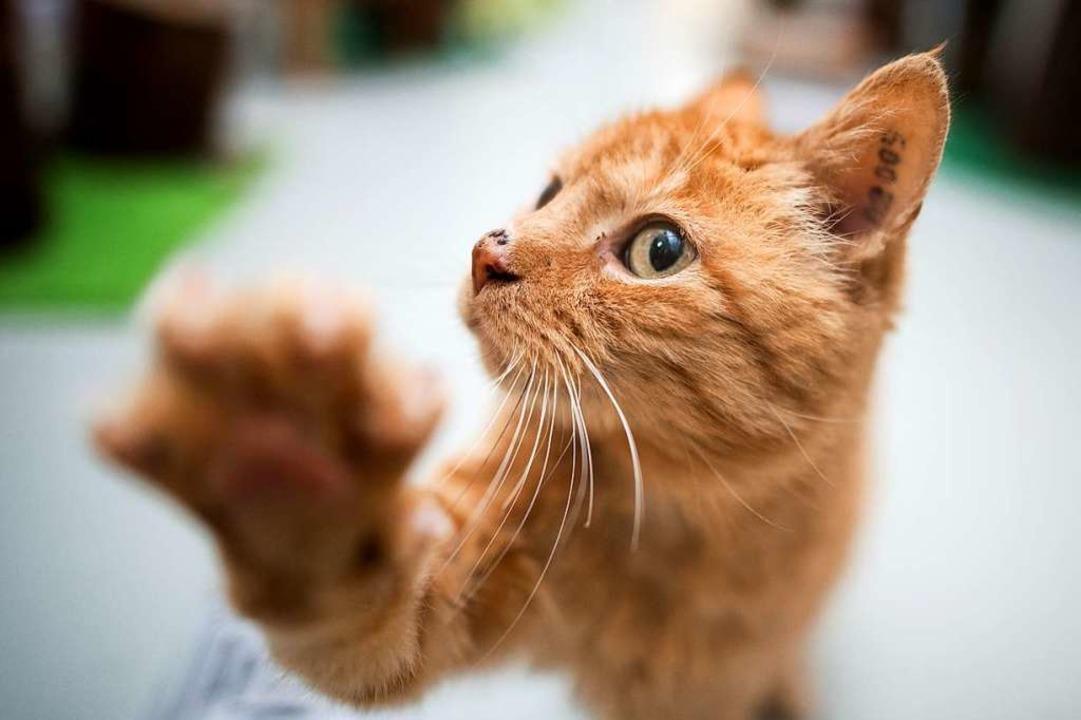 Die Katze als lebender Rauchmelder. (Symbolbild)  | Foto: dpa