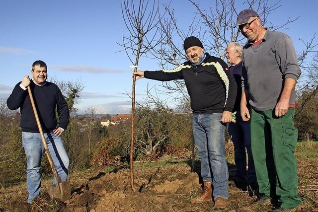 Freie Wähler pflanzen Bäume