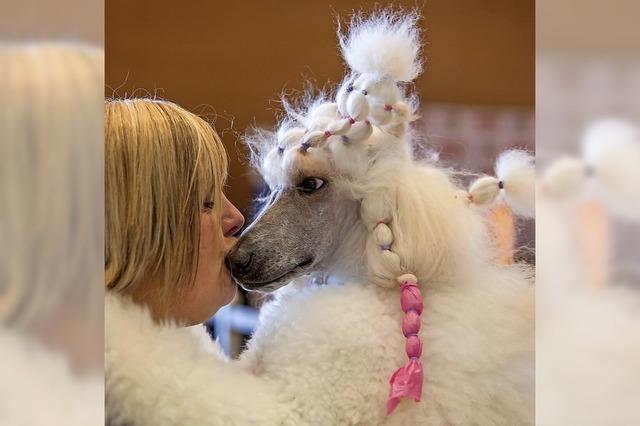 Hunde und Vergnügungen bald teurer