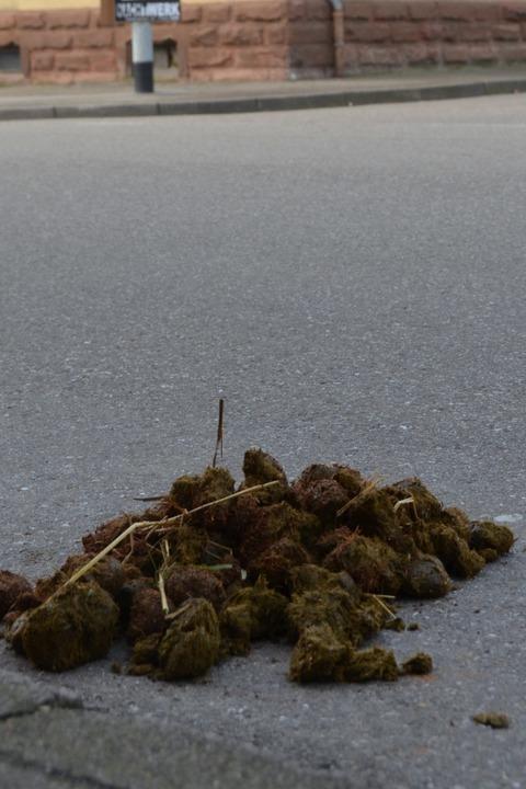 Pferdeäpfel – guter Dünger oder großes Ärgernis?  | Foto: Ulrike Derndinger