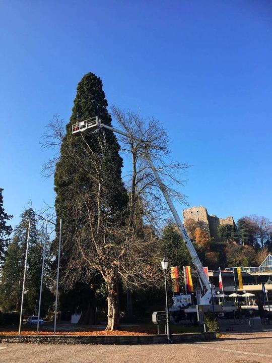 Der Mammutbaum vor dem Hotel Römerbad ...er wurde eine Lichterkette angebracht.  | Foto: BTT