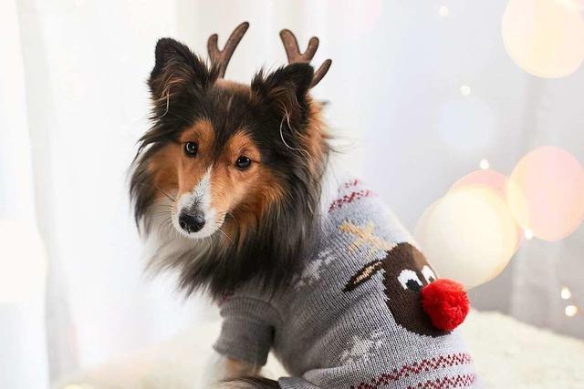Die BZ in Rheinfelden sucht Hund, Katze und Maus im weihnachtlichen Kostüm