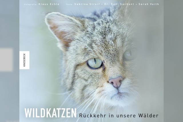 REGIO-BILDBAND: Die Wildkatze ist zurück