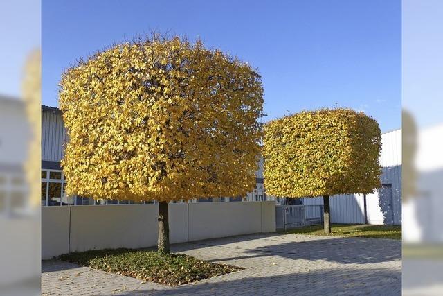 Trockenster Herbst seit Aufzeichnungsbeginn