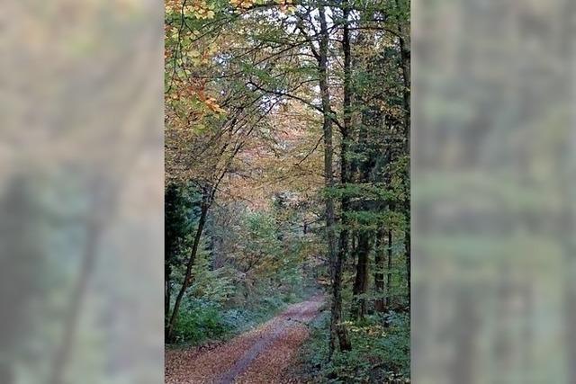 Rekordsommer setzt dem Wald zu