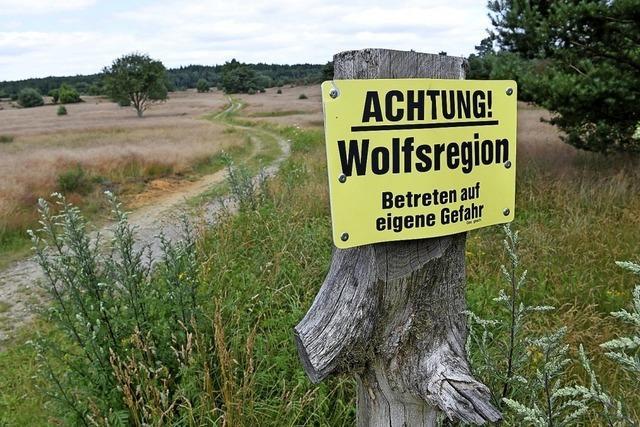 Keine Belege für Wolfsangriff