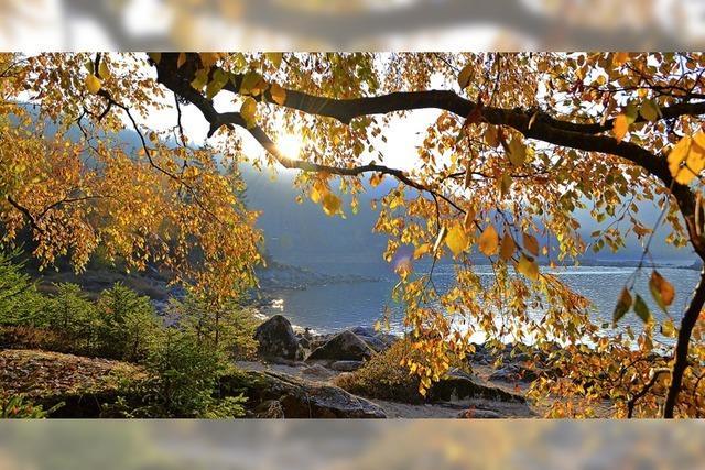 Ein goldener Herbst