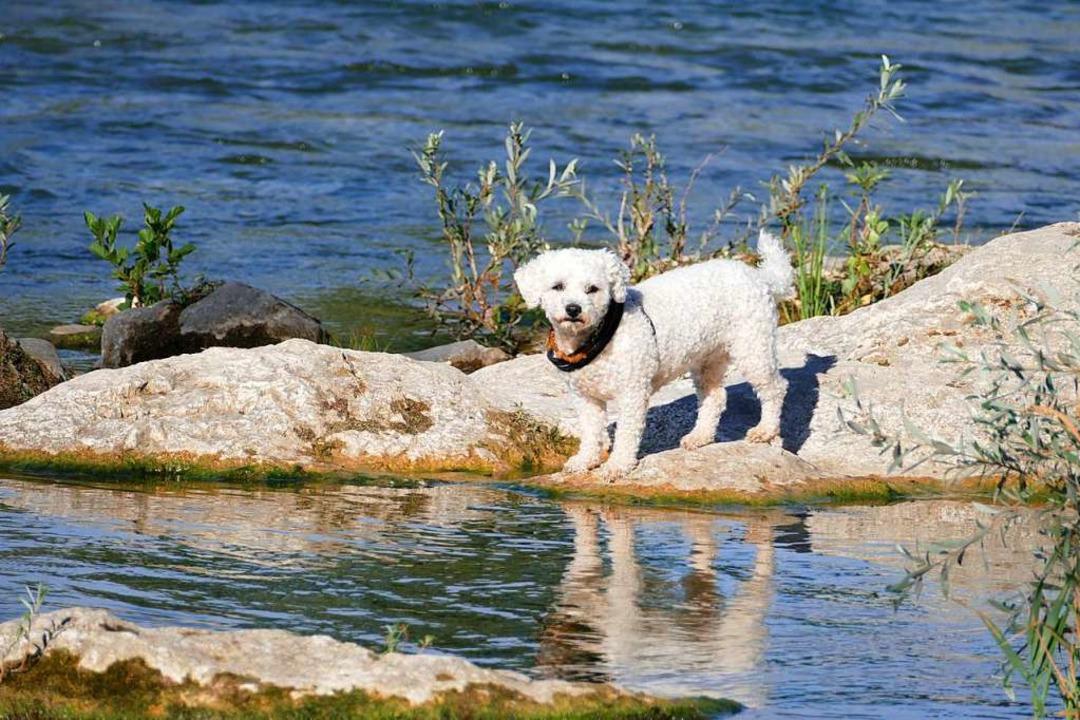 Eine Hundehalterin steigt in den Rhein...inen Rettungseinsatz aus (Symbolbild).  | Foto: Victoria Langelott