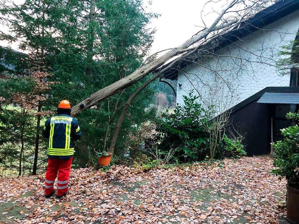 Umgestürzter Baum im Tannenweg in Waldkirch.  | Foto: FFW