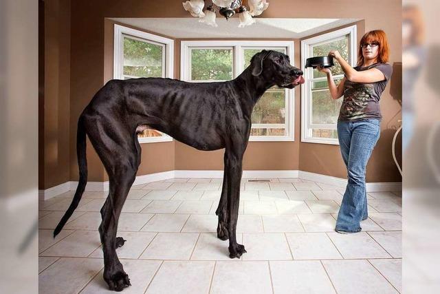 Das ist der größte Hund der Welt